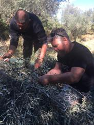 best friends help in harvesting olives